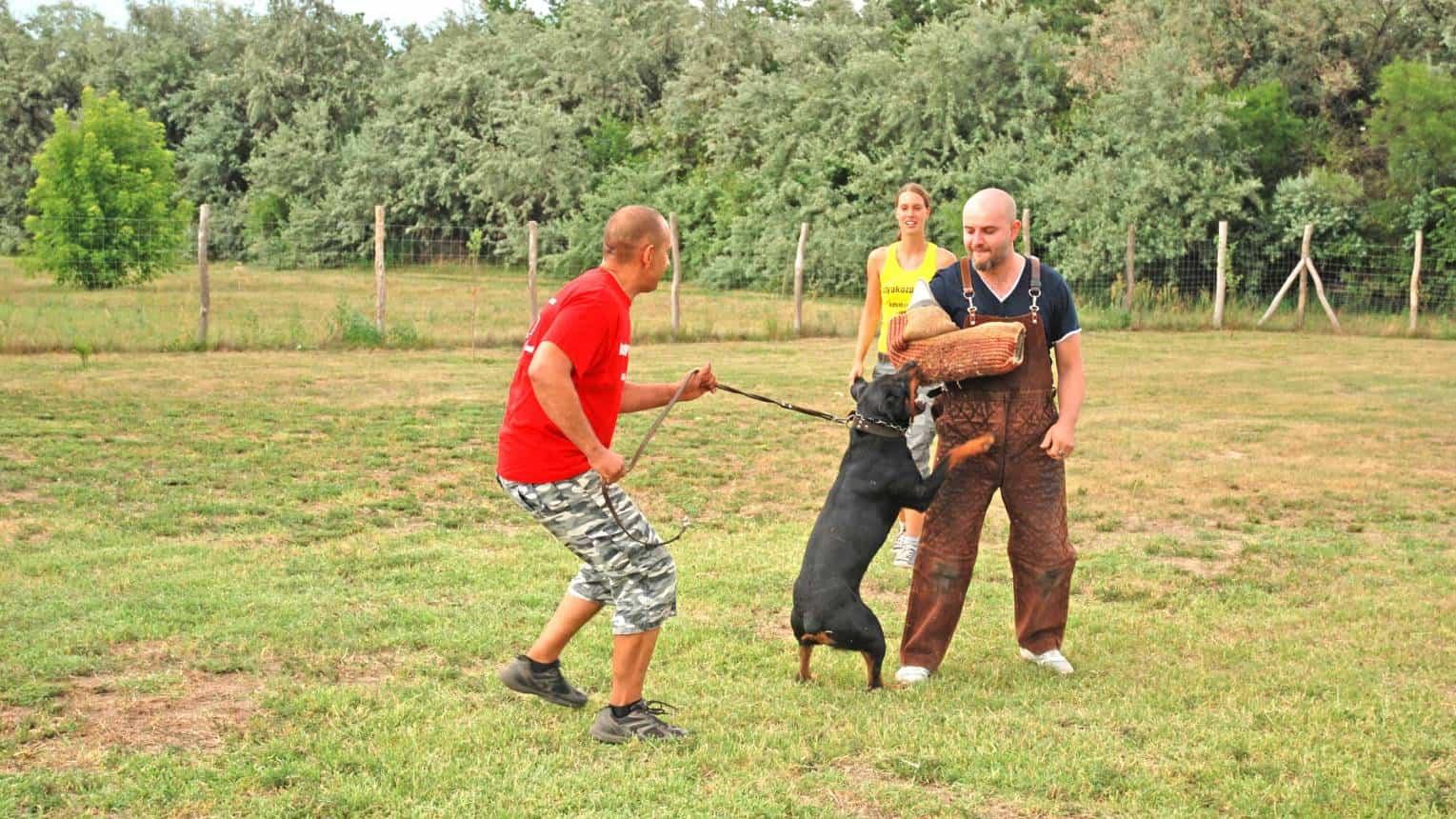 Túlélni egy kutyatámadást