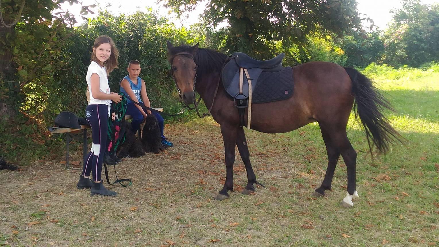 Futószáras lovas oktatás Zalakaros melletti farmon