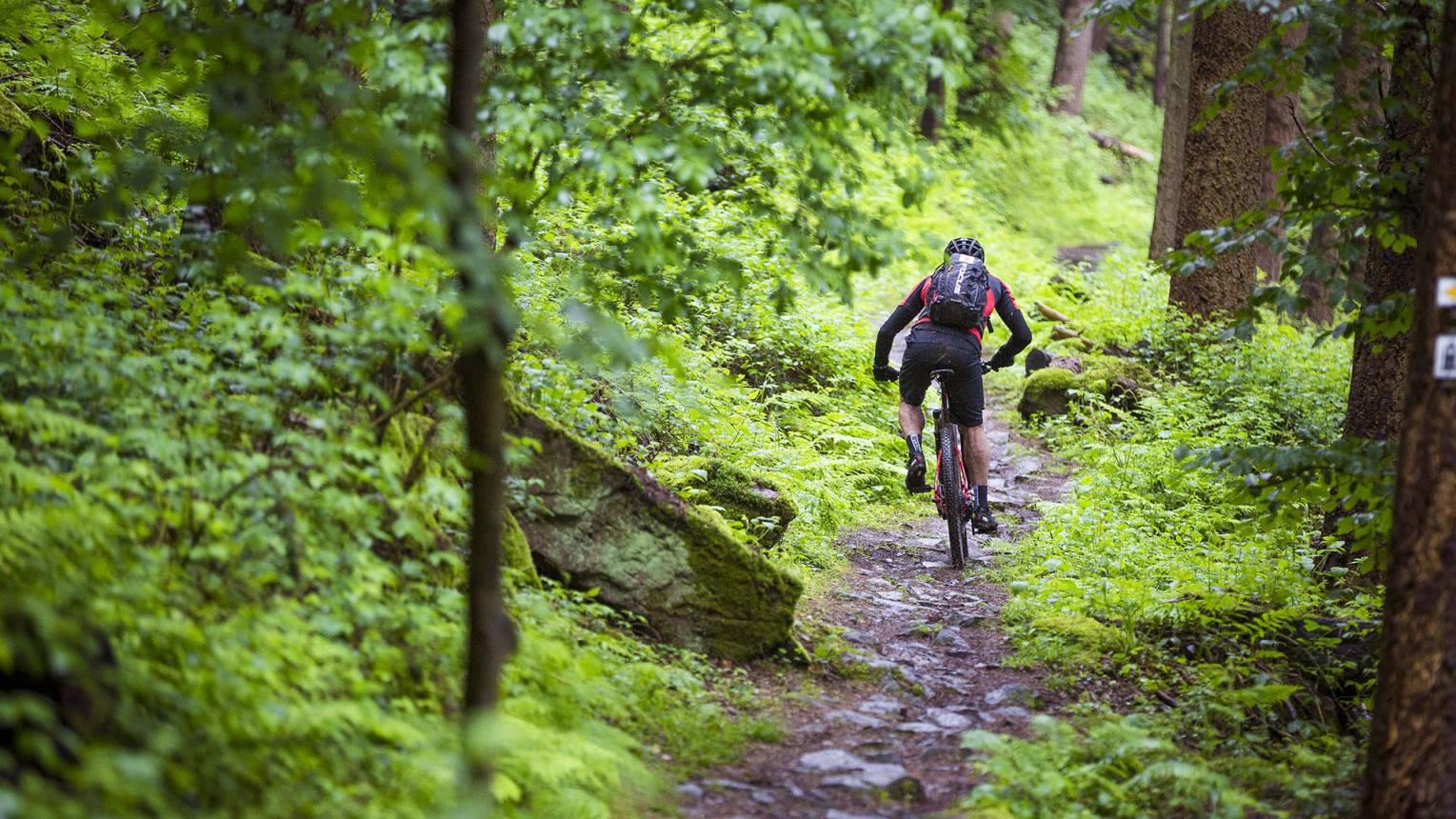 Mountain bike kerékpár túra a Mátrában