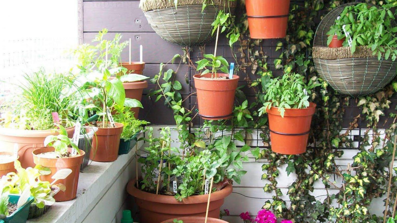 Hobbi kertész tanfolyam/Gyógynövények kurzus