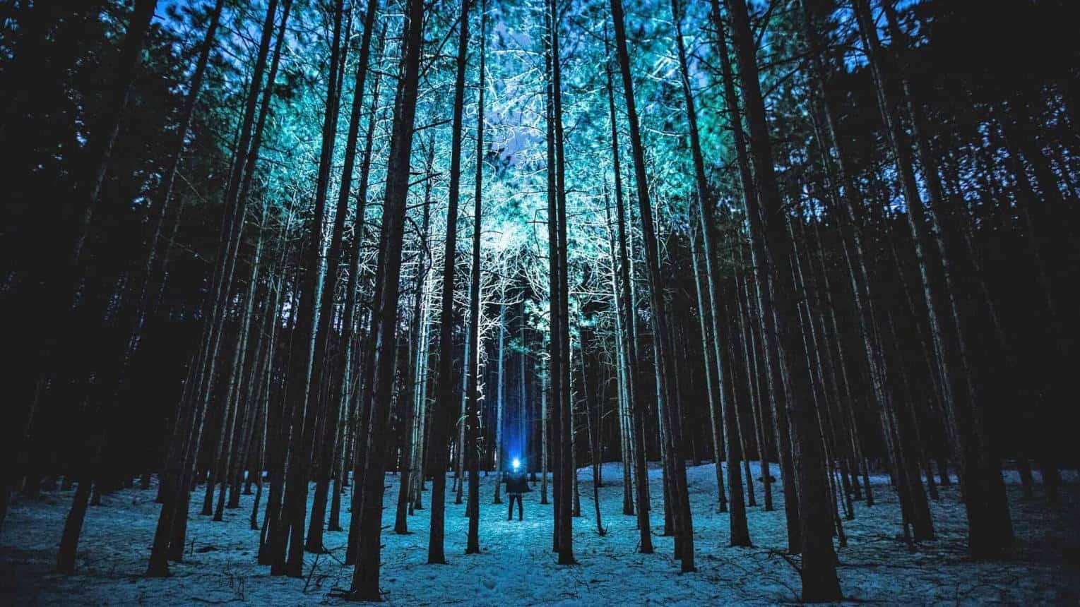 Láthatatlan erdő - A pályán teljes sötétségben lesztek végig!