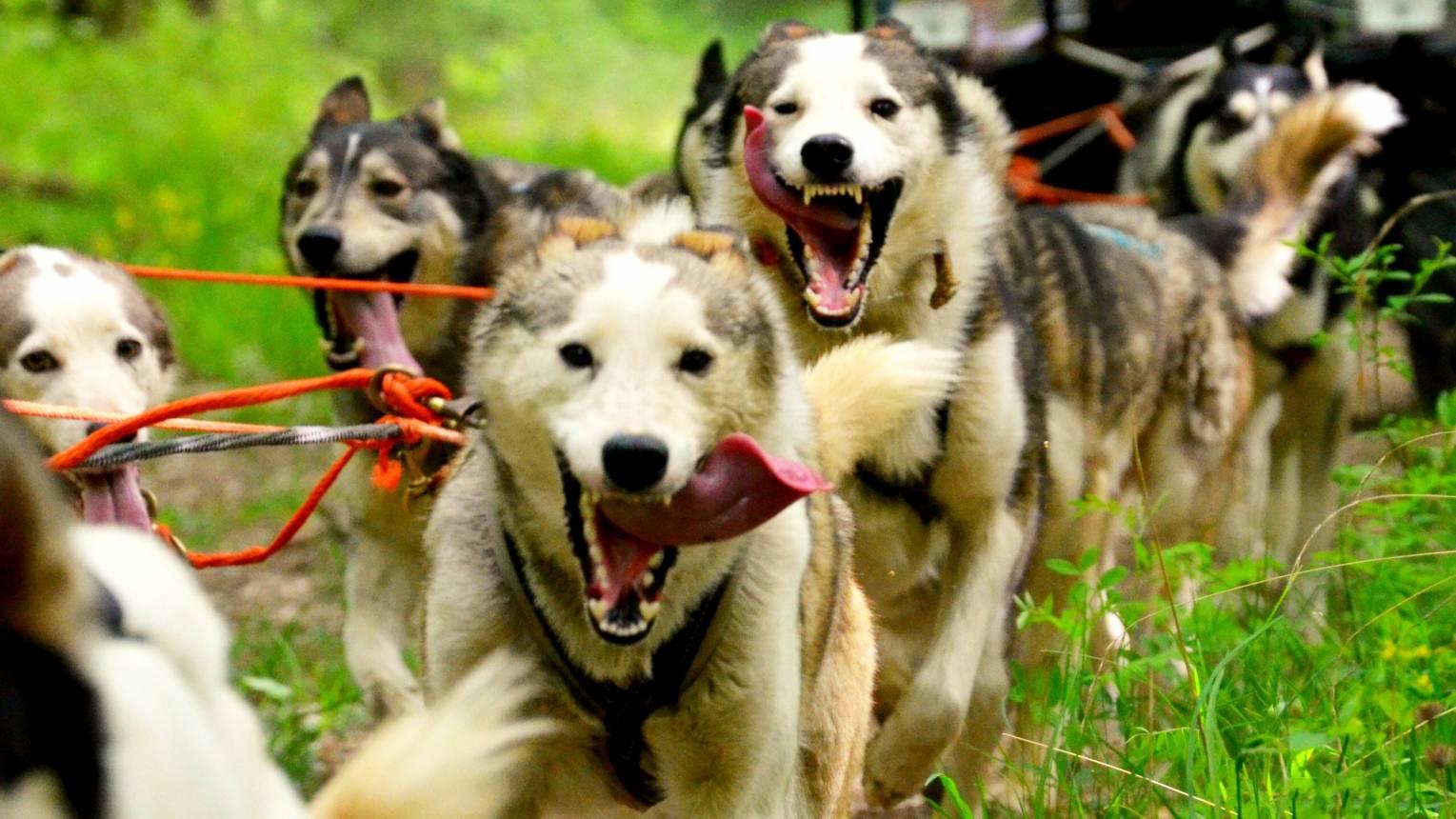 Husky kutyafogat túra