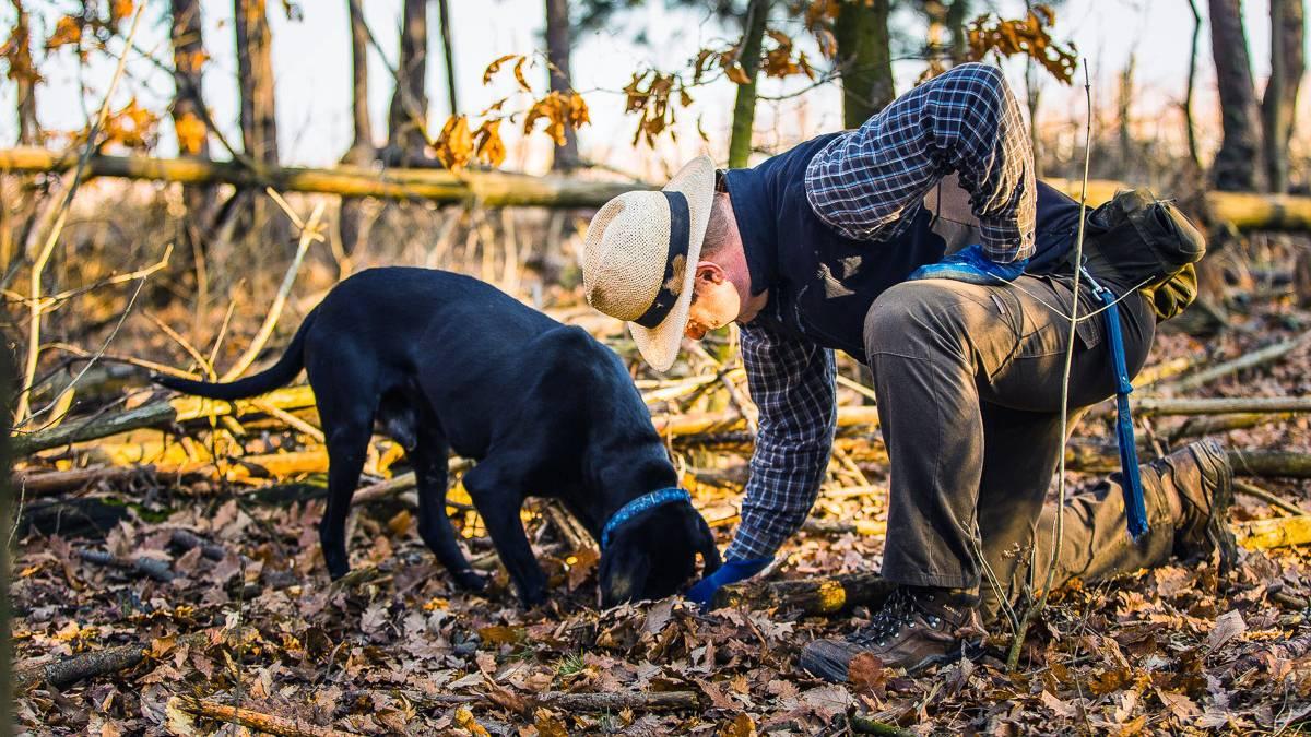 Családos Szarvasgomba élményvadászat kutyákkal Budapest környékén