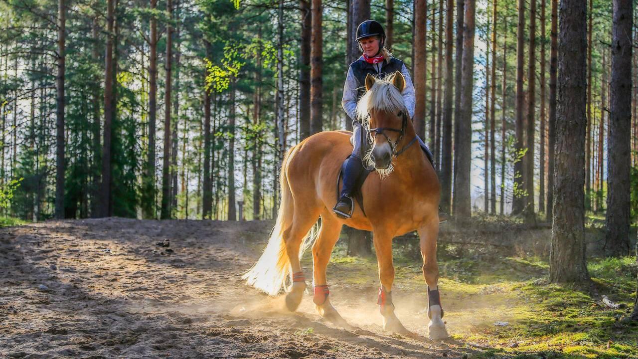Kentaur túra tereplovaglás a Mátrában