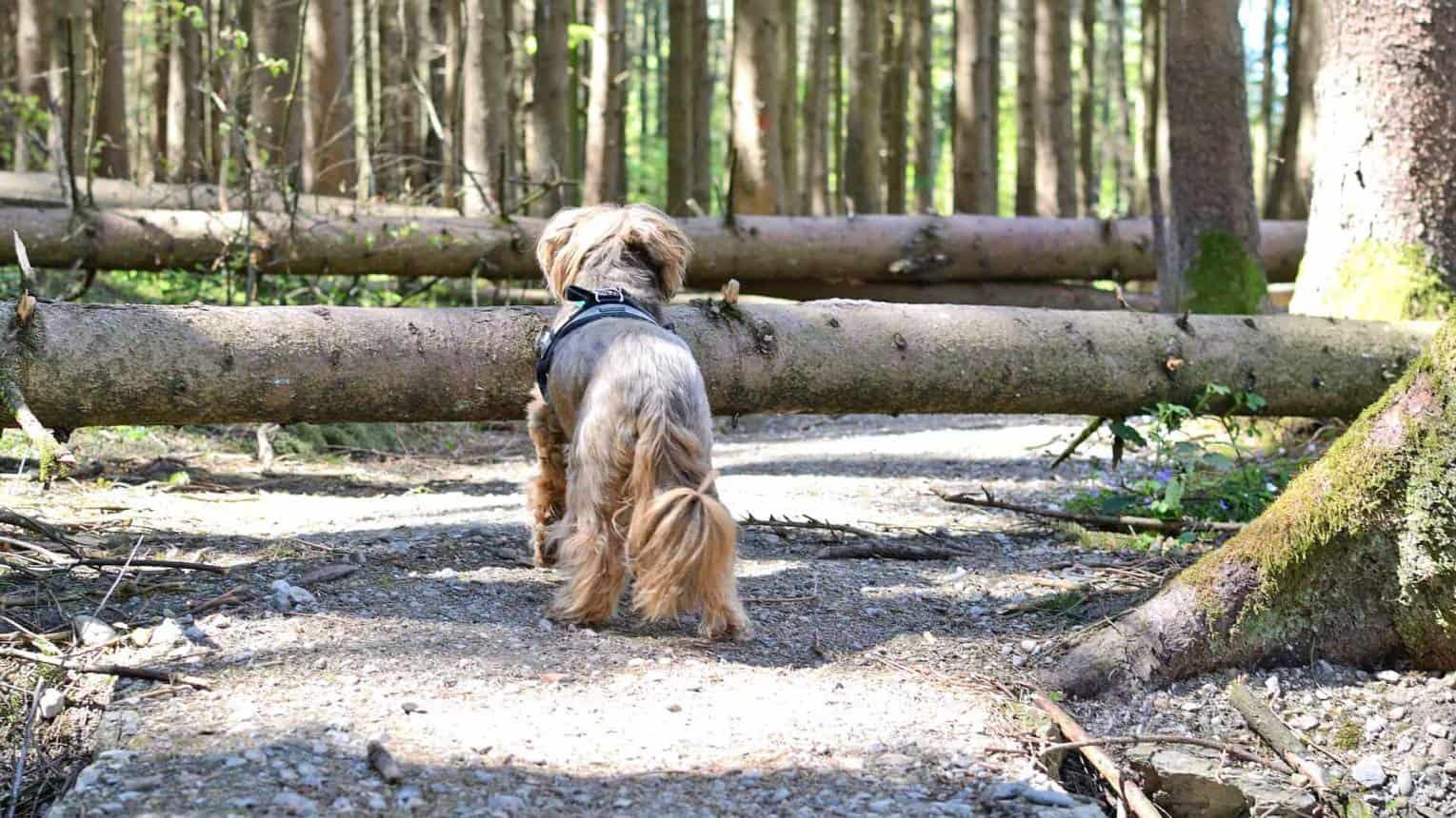 Dogs Hiking – A kutyások is járnak túrázni